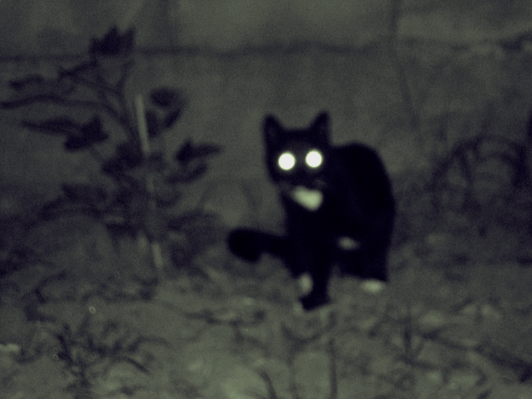 Chuchu, devil cat of East L.A.